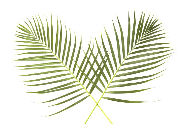 palm sunday global